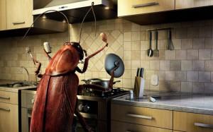 Только мы сможем эффективно морить тараканов. Продуктивная борьба с тараканами.