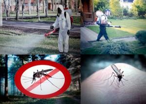 Обработка от комаров в Самаре и Тольятти