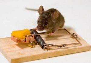 Избавиться от мышей в Тольятти и Самаре